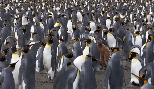 um-estranho-no-ninho-de-pinguins